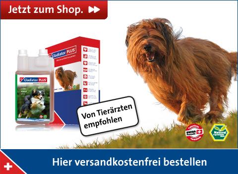 Shopbanner Hund