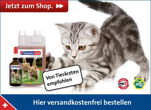 Shopbanner Katze