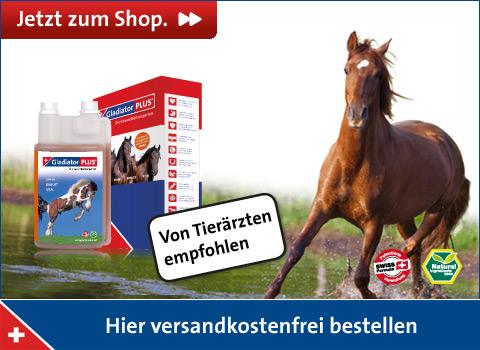 Shopbanner Pferd